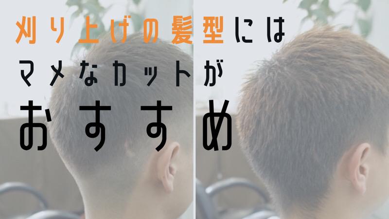 【大阪 堺】刈り上げの髪型にはマメなカットがおすすめというブログのタイトル画像
