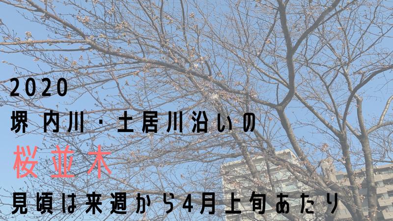 2020【堺 内川・土居川沿いの桜並木】見頃は来週から4月上旬あたりというブログのタイトル画像